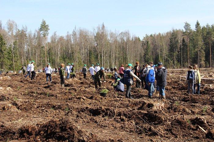 Сотрудники 70 подразделений МОБТИ посадили деревья в рамках акции «Лес Победы»